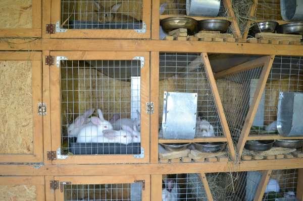 Чертеж клетка для кроликов своими руками фото