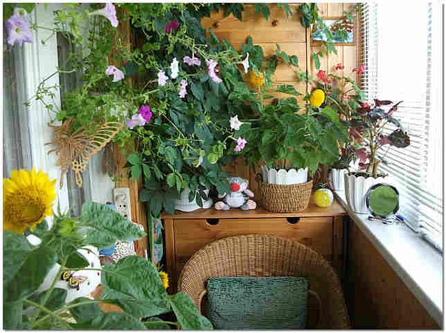 в сад фото маленькой квартире зимний