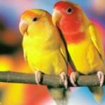 Адаптация попугая.Несколько советов в первые дни