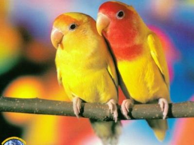 Первые дни попугая в доме
