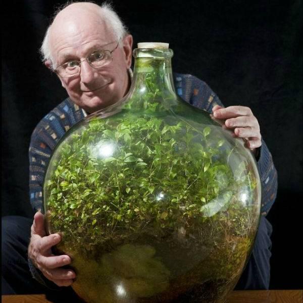 Мини-сад в бутылке