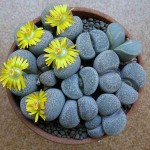 Необычные растения мира в интерьере