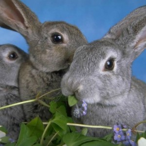 Условия содержания и разведения кроликов