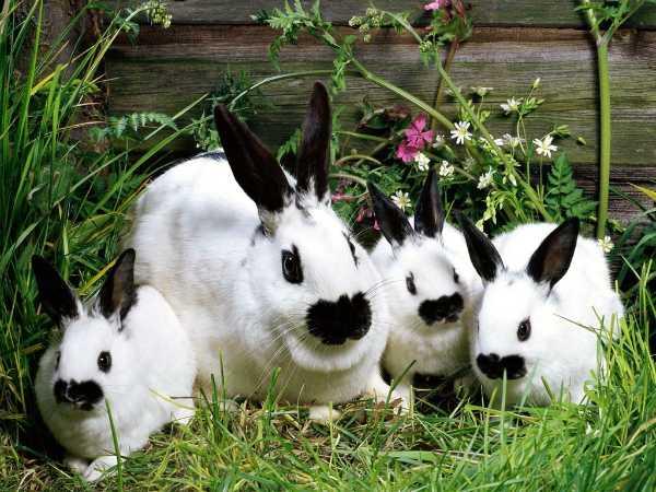 Условия содержания, разведения кроликов