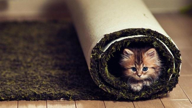 Выбираем правильный ковёр