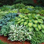 Правильное выращивание растений