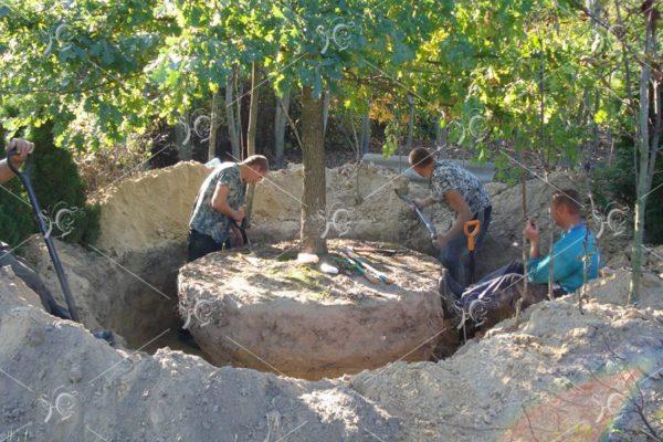 Благоустройство и озеленение. Посадка деревьев