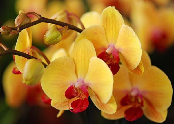 Уход и выращивание комнатных растений