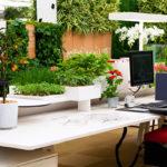 Озеленение интерьера, офисов