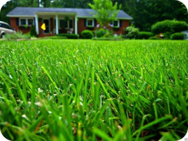 Как выбрать семена газонных трав. Особенности территории