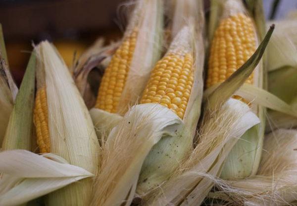 Выращивание овощных культур у себя на огороде. Советы по кукурузе