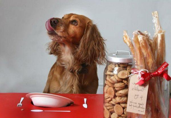 Чем кормит домашних питомцев? Качественный сухой корм для собак