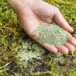 Засоби захисту рослин, добрива, інші товари для саду і городу. Асортимент насіння для високого врожаю