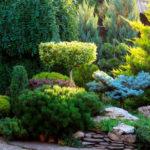 Производство и продажа декоративных растений