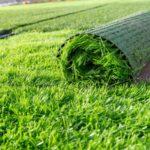 Покупка и укладка газонной травы