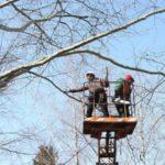 Когда необходима санитарная вырубка и обрезка деревьев?