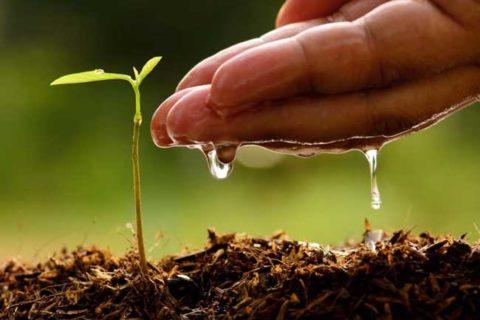 Почвогрунт с доставкой. Благоприятные условия для роста растений