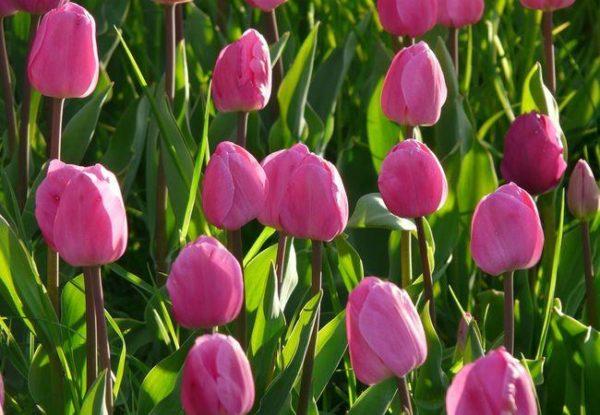 Быстрый заказ цветов в Астане (Нур-Султане)