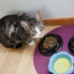 Питание ваших домашних питомцев — покупка корма для собак и кошек
