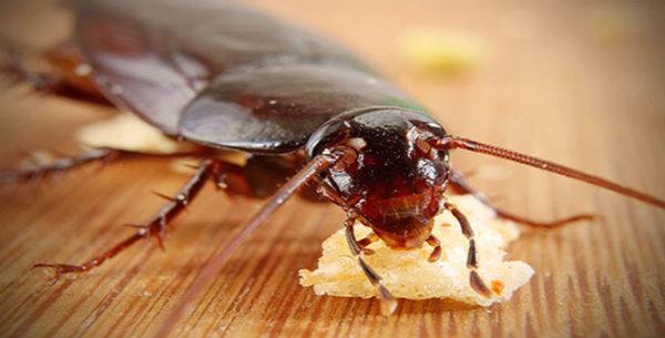 Профессиональная обработка от насекомых, грызунов, вирусов, плесени в Екатеринбурге и пригородах