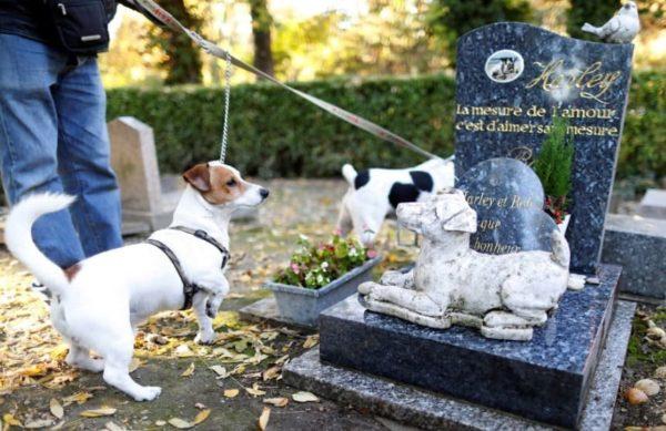 Единственный официальный мемориальный комплекс по захоронению животных в СПб