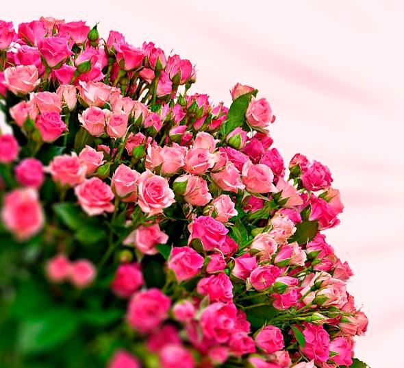 Быстрая доставка цветов в Кирове
